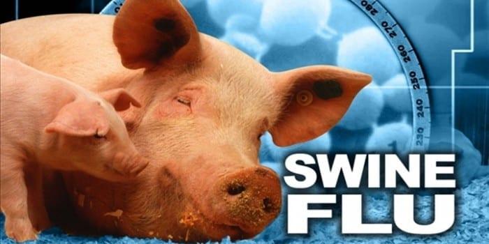Swine Flu , How Dangerous Is This Virus Really?